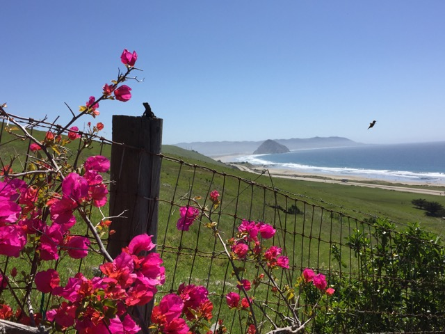 views of Morro Bay in spring