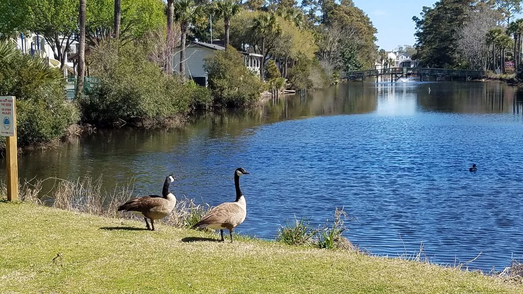 One of many lakes in Surfside and abundent wildlife