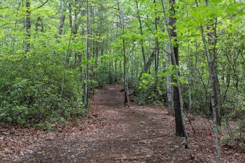 Quiet hiking trails in the area to enjoy