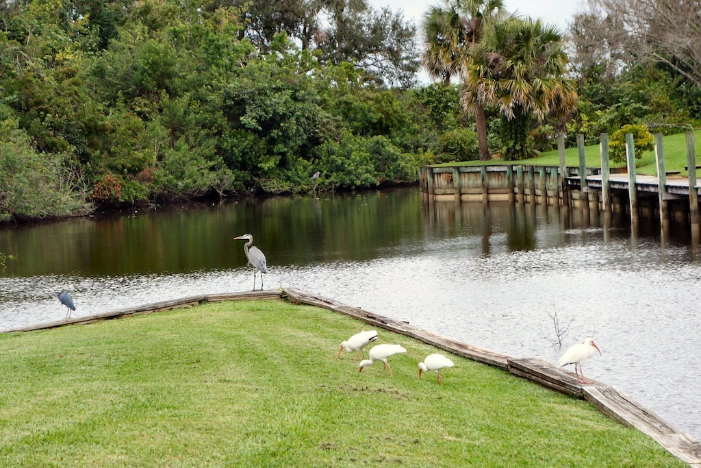 Herons and egrets everywhere!  Take in nature with your morning coffee :-)