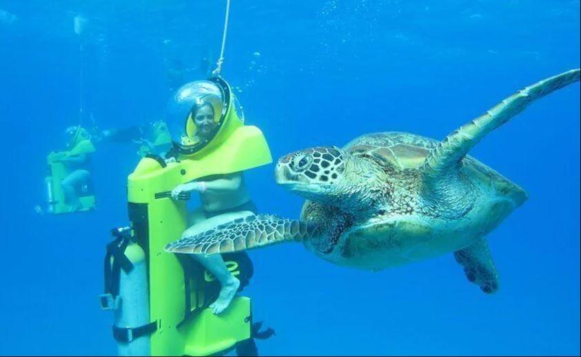 Ocean adventures await you!