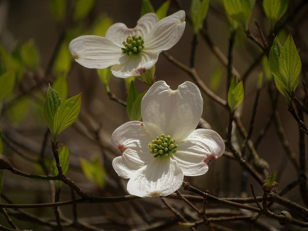 Visit in April to enjoy Spring wildflowers as well as blooming Dogwood and Redbud trees.