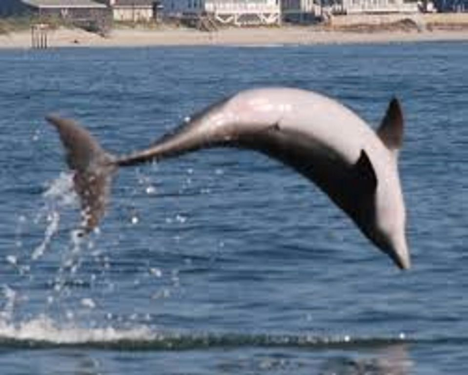 Dolphin watch  tours