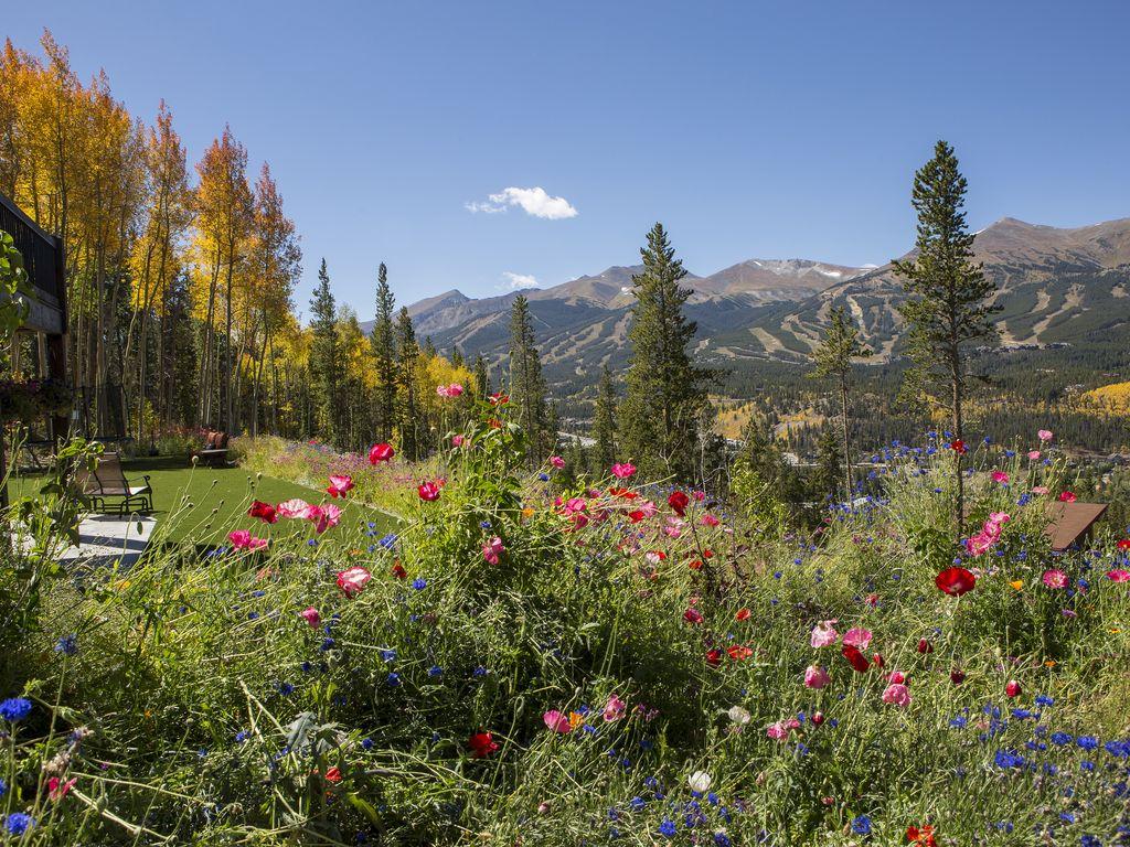 Flowers and aspens - Major aspen grove!