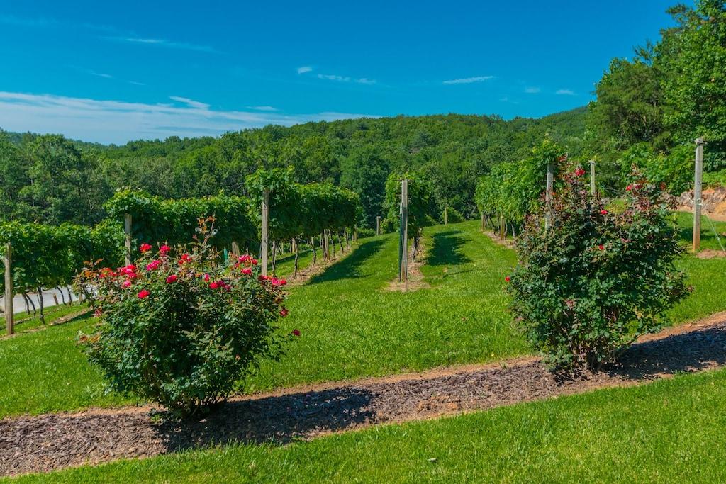 Vineyard Down the Road