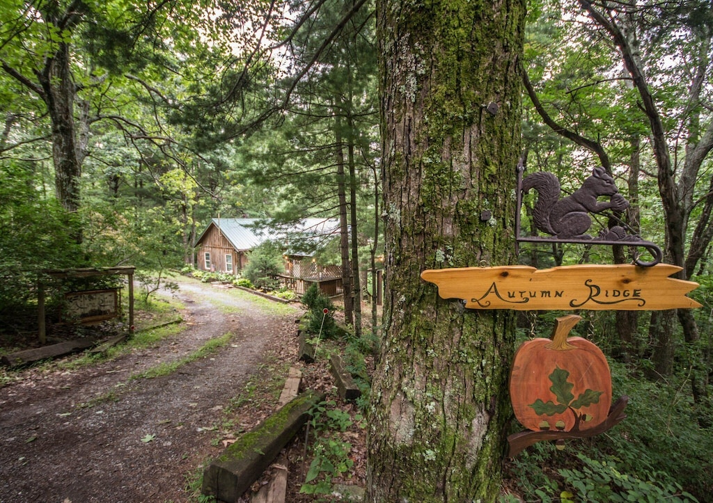 """A true """"cabin in the woods"""" experience"""