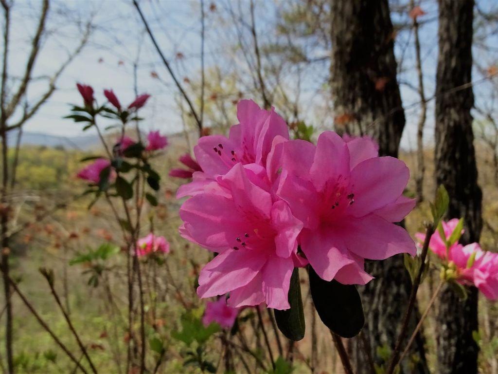 Azaleas bloom in April too.