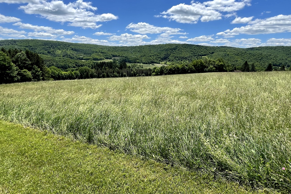 Hay field and rolling hills