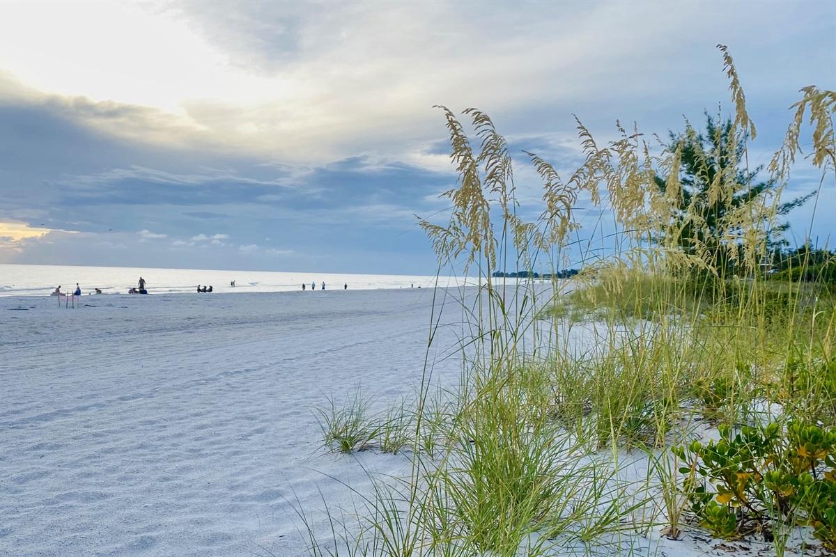 Sea oats flourish on the beach front on Holmes Beach