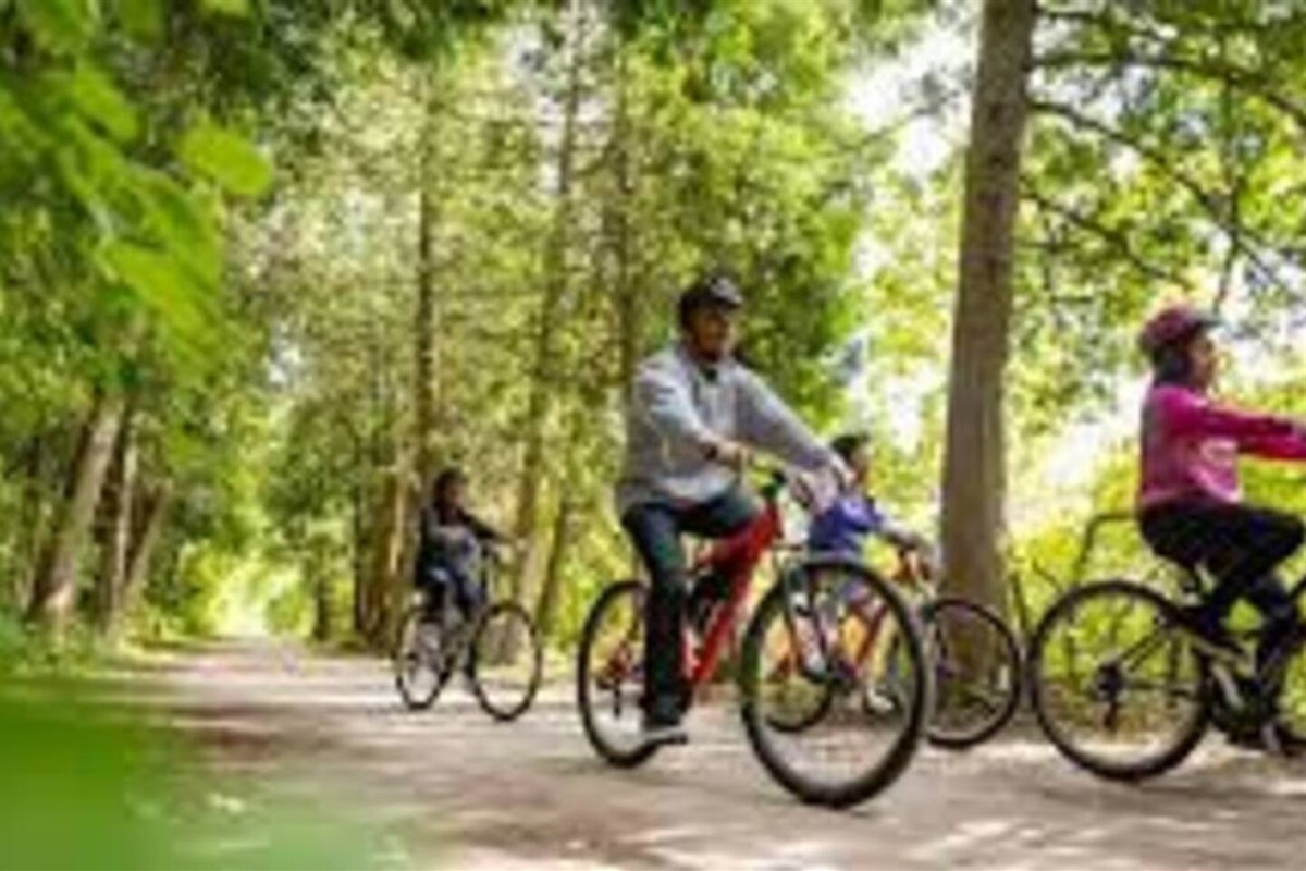 There are tons of bikes that Adventure Cottage includes for guests to bike around Sand Bay Point and to different sites throughout the area.