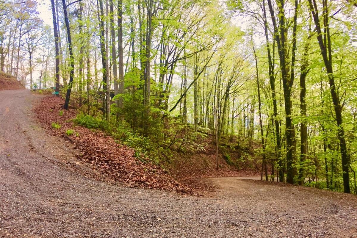 Pretty drive up the hill