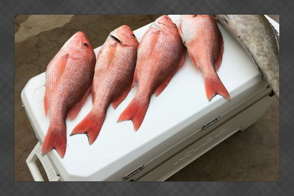Fresh Catch- Red Snapper and Grouper