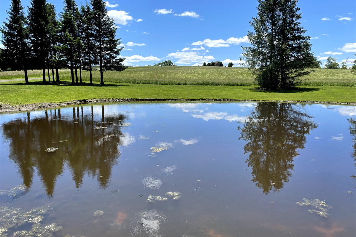 Pond looking across hay field to Skyview Acres