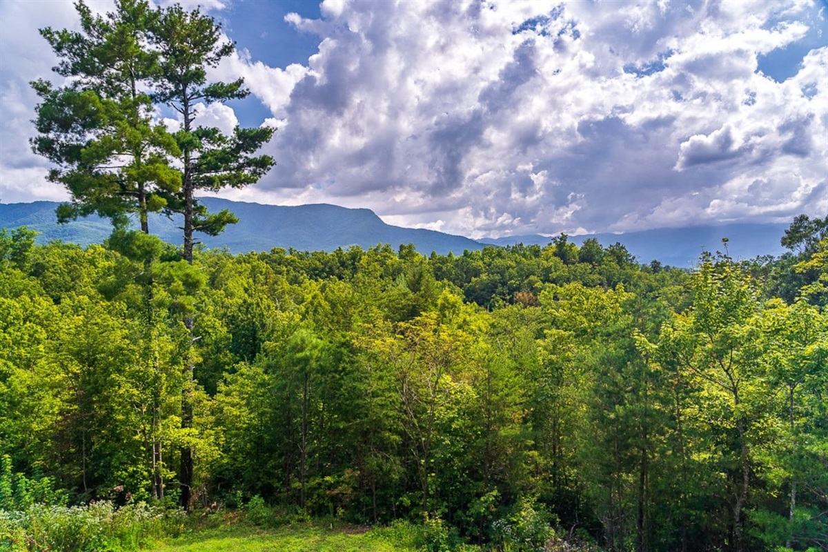 Views of the Smoky Mountains and forest scenes that calm the senses