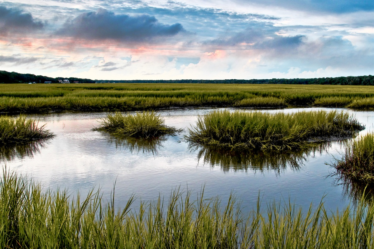 Our Marshes