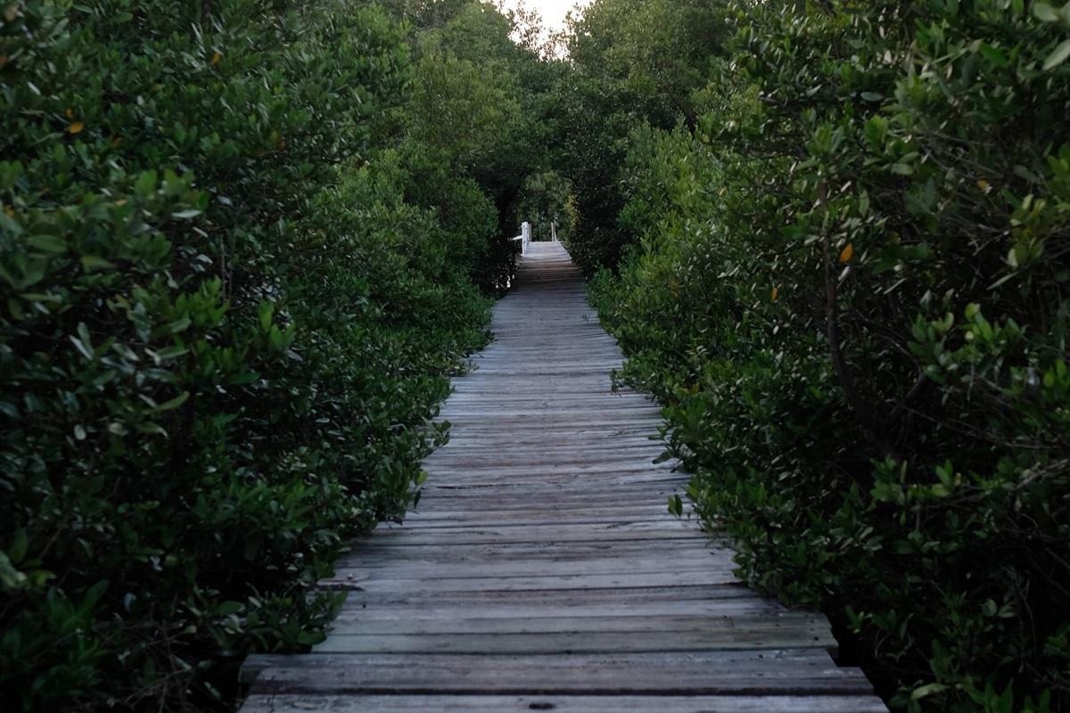 Cedar Key