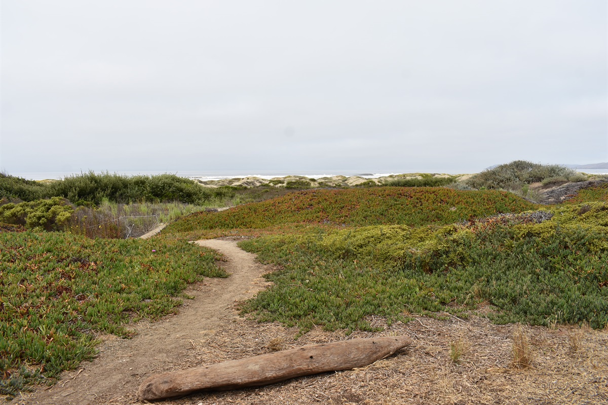 Beach path access