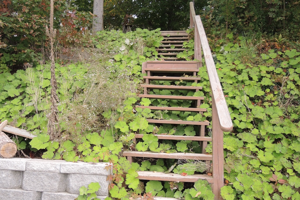 Steps leading to stone patio and  water