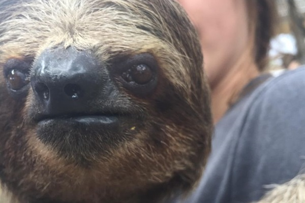 Hug a sloth!!!