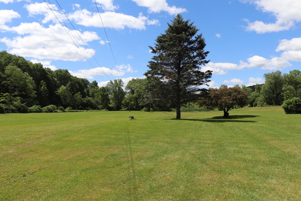 HUGE lawn to run free in!