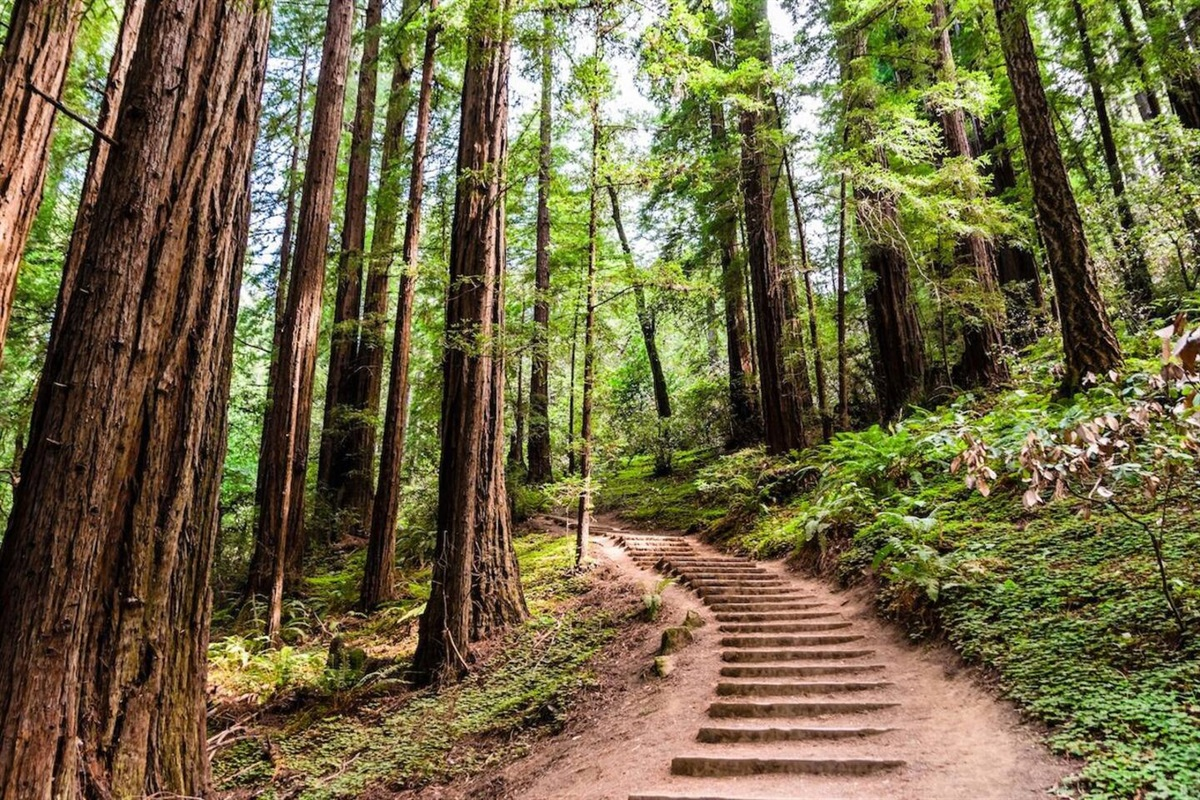 Hiking trails at Forest Knolls