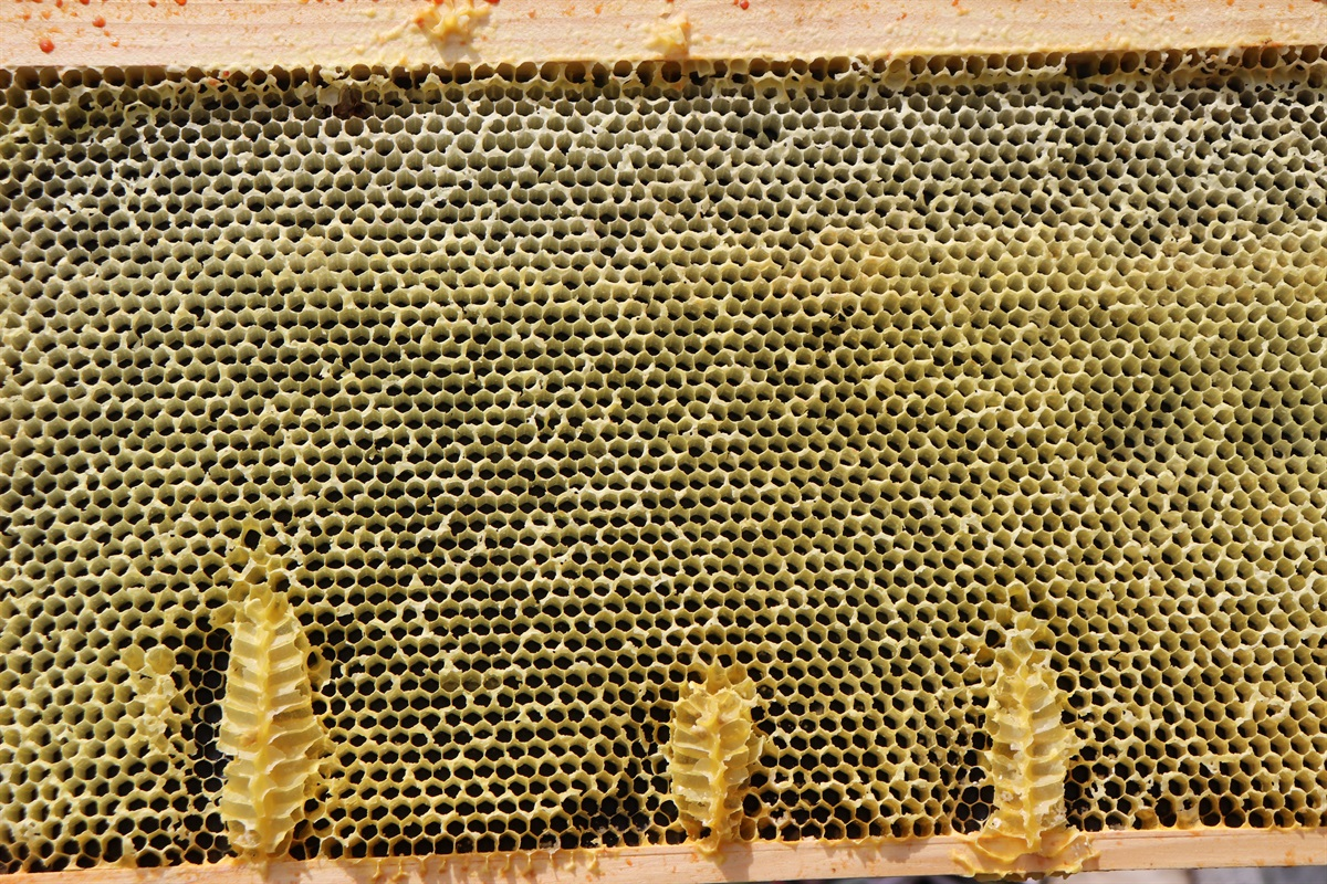 Honeybee Hive Frame