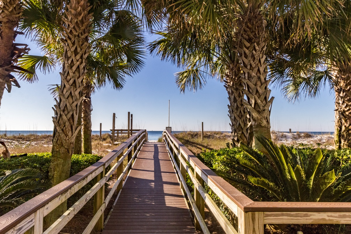 Beach Access Lined with Palm Trees