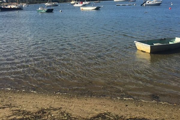 Shallow shoreline on Mill Pond is a location perfect for clamming!