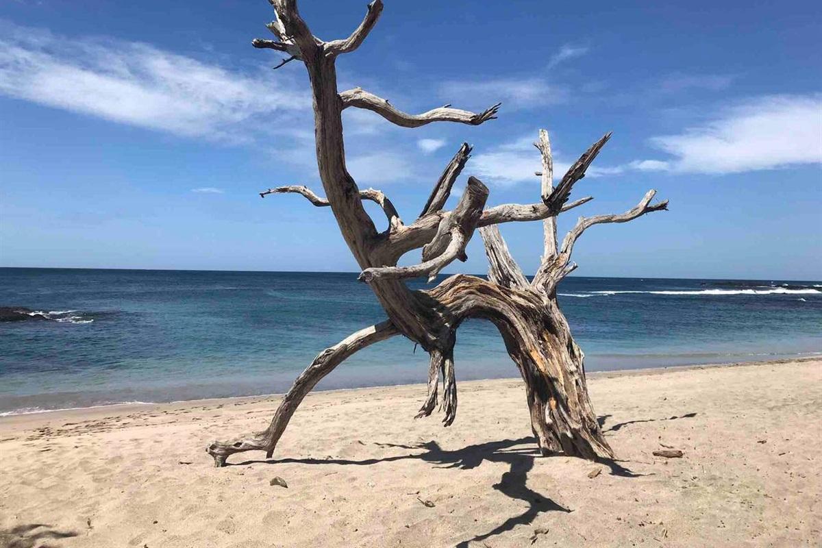 Amazing driftwood art