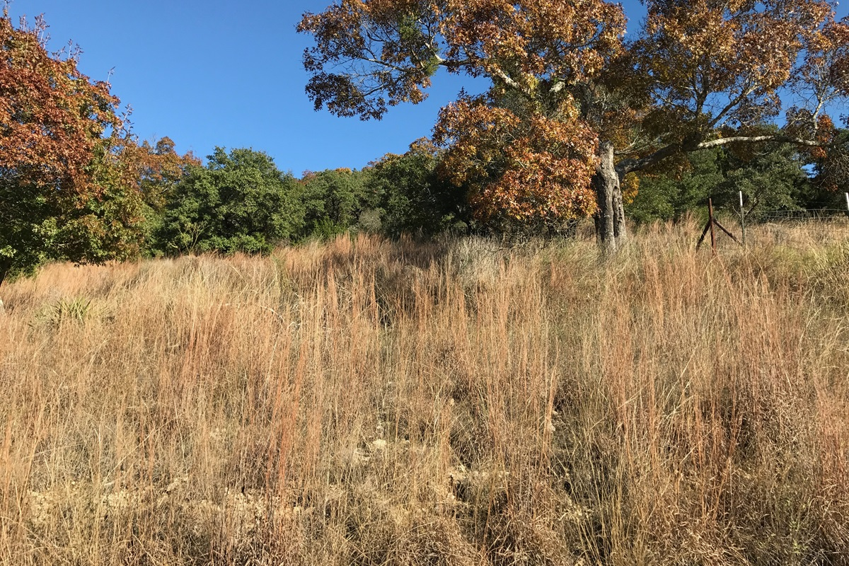 Part of our private 55 acres.