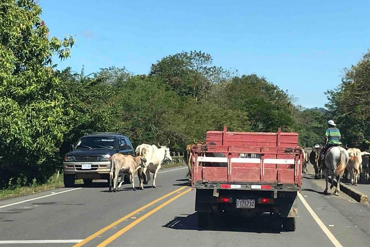 A local traffic jam!