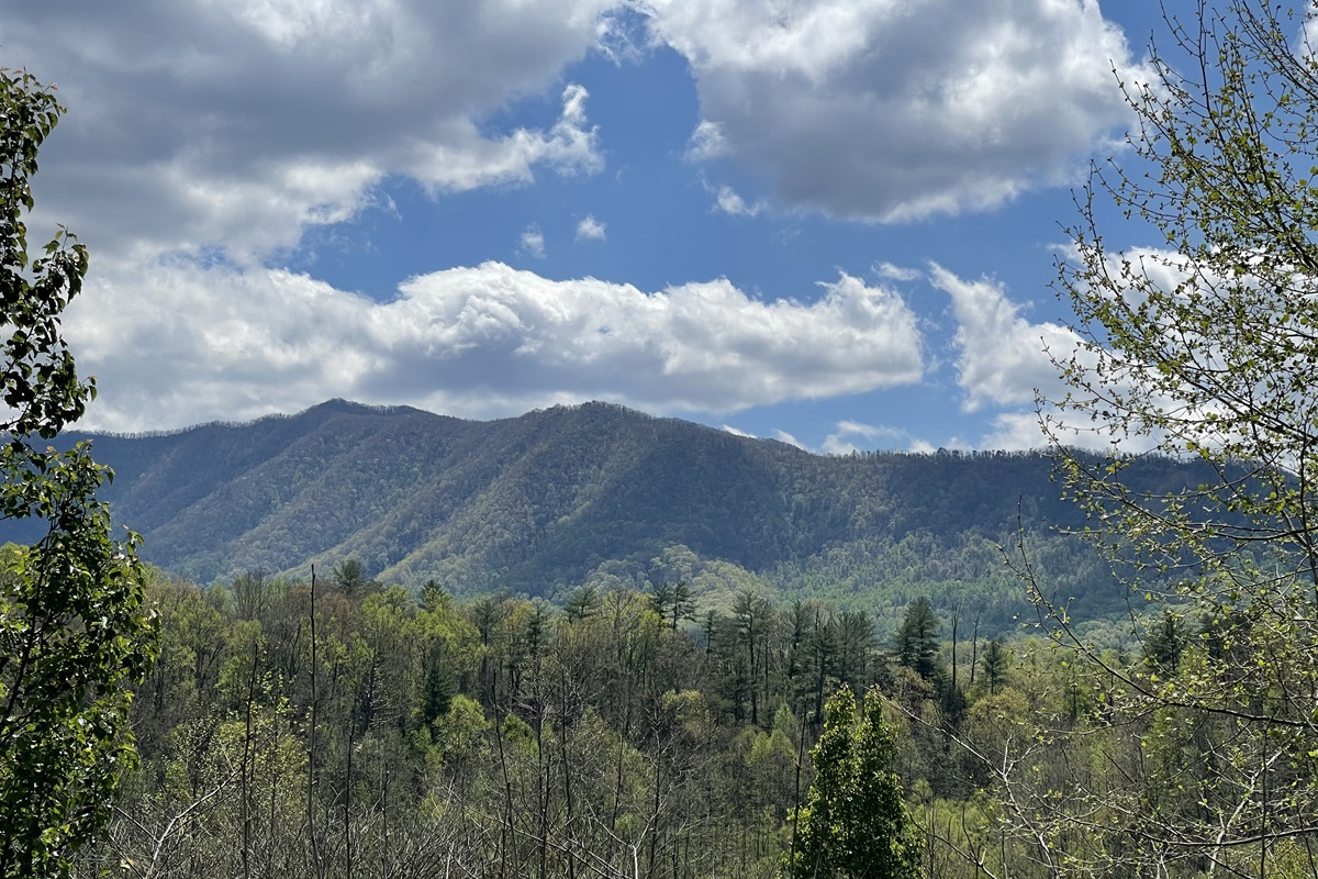 The views as you make your way into the beautiful Laurel Valley...this was taken from a spot where you can pull over on the side of the road.  No driving up steep mountains involved!
