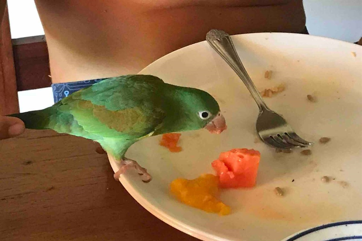 Our cheeky little parrot helping itself to breakfast