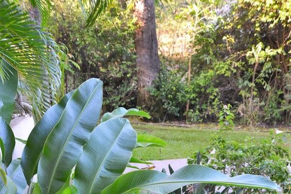Garden below the lanai