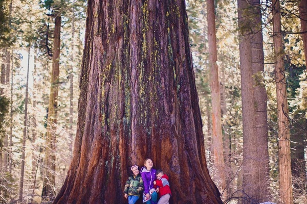 Big Trees State Park - full of sequoias