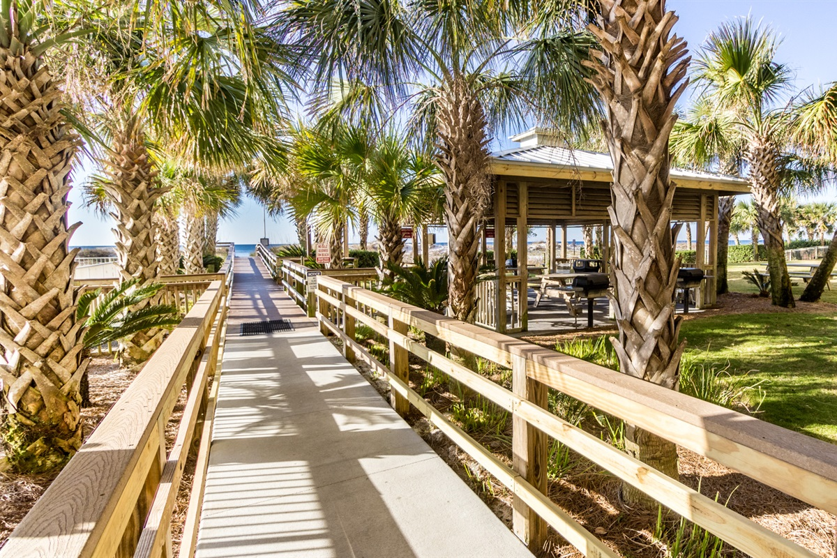 Palm Lined Beach Access