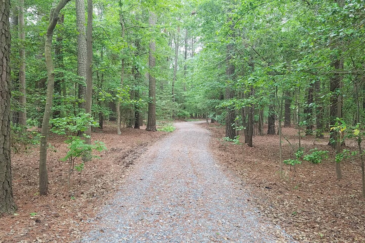 View down the driveway.  Not just a beach house 4 acres of trees. Nature retreat
