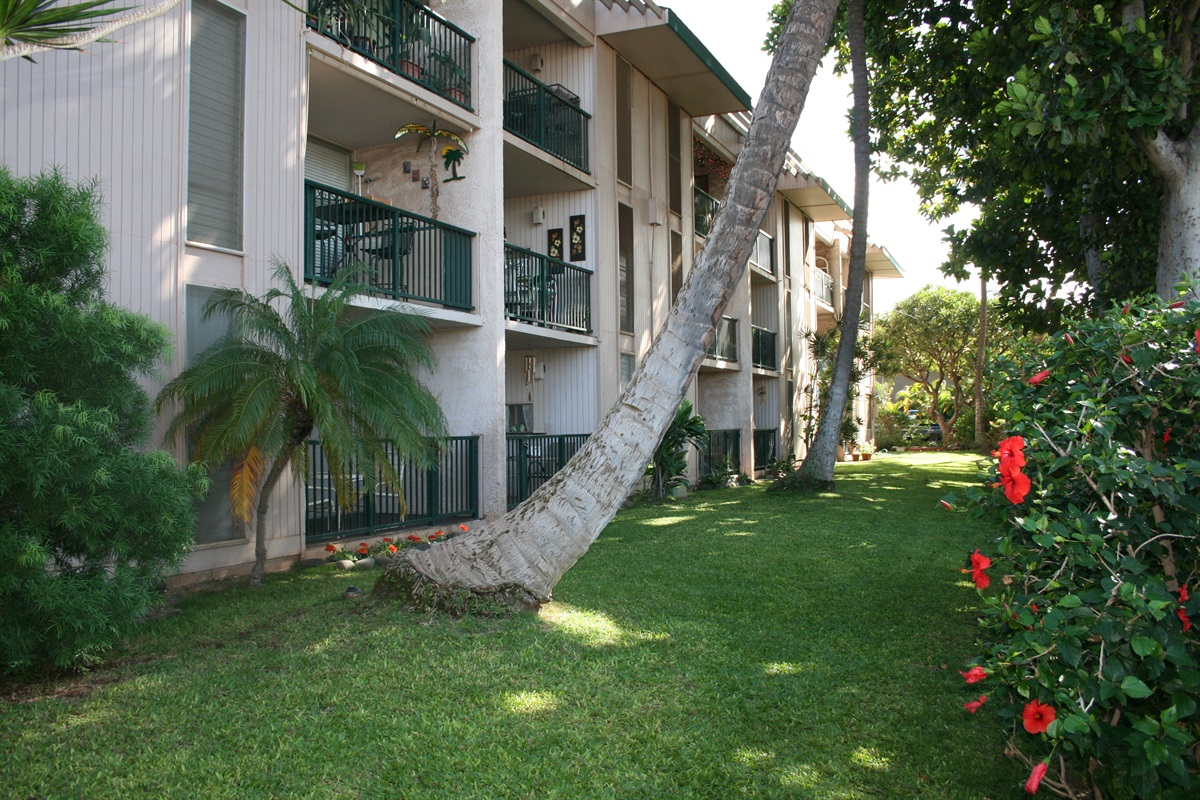 Maui's wonderful Palms, Plumeria, and Hibiscus