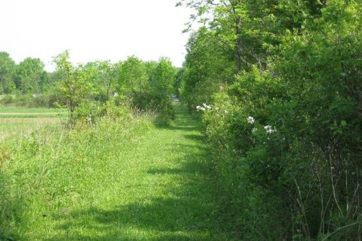 Trail on 40 acres