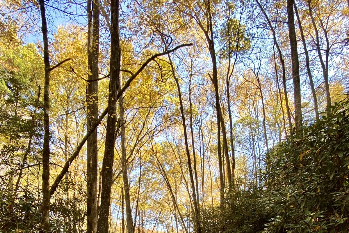 Come enjoy fall!