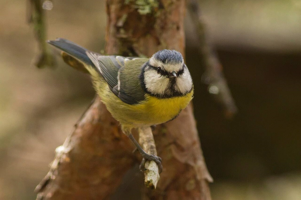 A small bird, photographed in the ground of Glentruim Lodge.